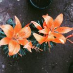 Pretty blooms in todays rainy dull weather!   hellip