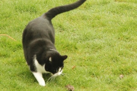 114bb-070331_mouse-hunt06